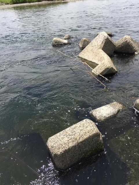 スモールマウス 多摩川中流域 実釣レポート 2018年6月20日