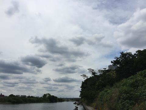 スモールマウス 多摩川中流域 実釣レポート 2018年6月19日