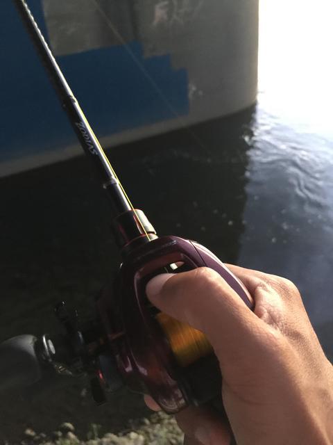 スモールマウス 多摩川中流域 実釣レポート 2018年8月17日