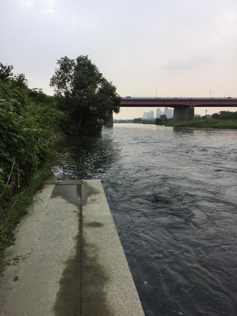 スモールマウス 多摩川中流域 実釣レポート 2018年8月29日