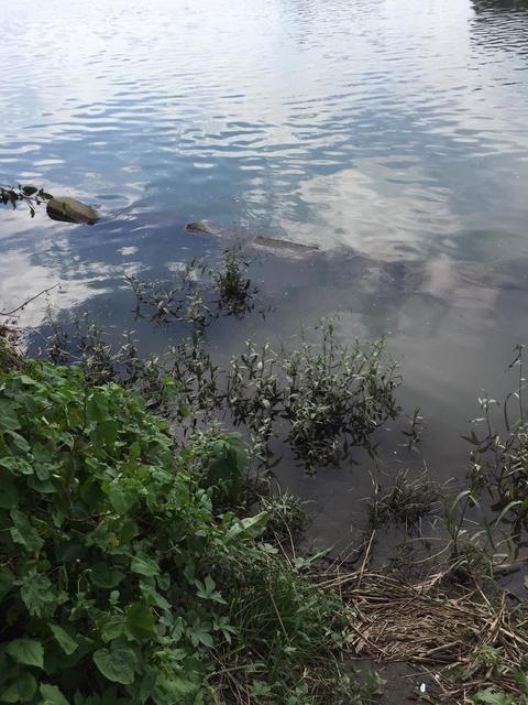 スモールマウス 多摩川中流域 実釣レポート 2018年9月6日