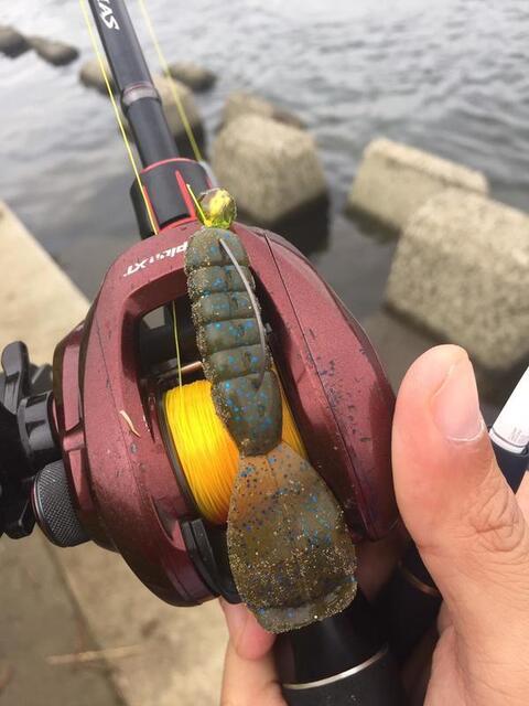 スモールマウス 多摩川中流域 実釣レポート 2018年10月23日