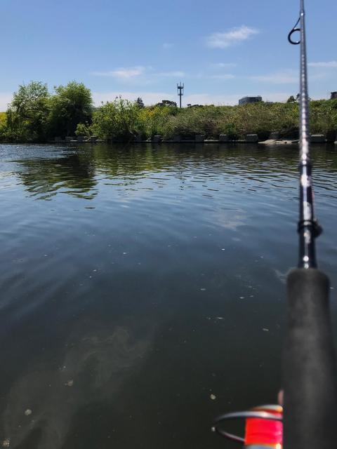 スモールマウス・マルタウグイ 多摩川中流域 実釣レポート 2019年4月16日