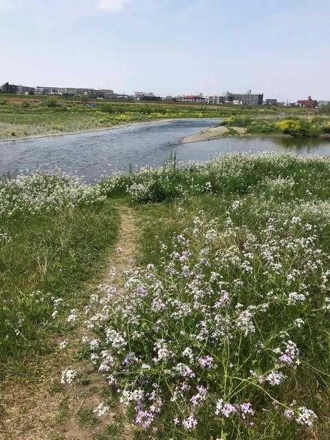 スモールマウス 多摩川中流域 実釣レポート 2019年4月19日