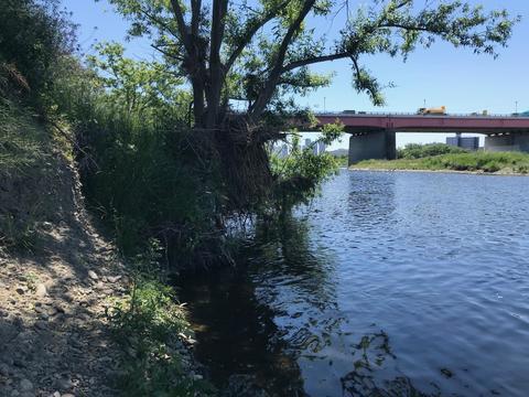 スモールマウス 多摩川中流域 実釣レポート 2019年5月8日