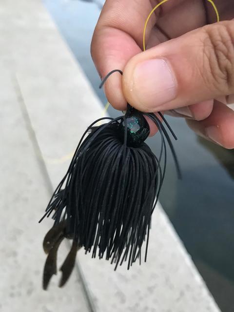 スモールマウス 多摩川中流域 実釣レポート 2019年6月20日
