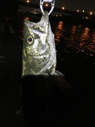 スモールマウス 多摩川中流域 実釣レポート 2019年7月24日