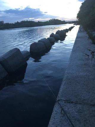 スモールマウス 多摩川中流域 実釣レポート 2019年8月6日