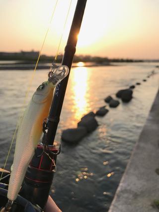スモールマウス 多摩川中流域 実釣レポート 2020年5月1日