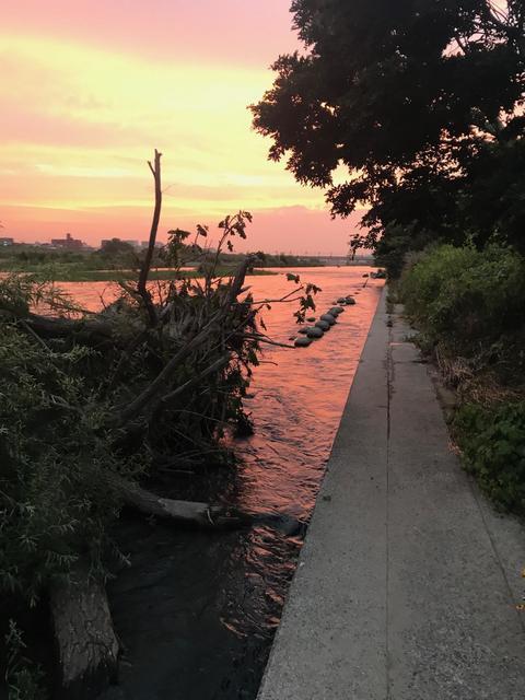 スモールマウス シーバス多摩川中流域 実釣レポート 2020年6月24日