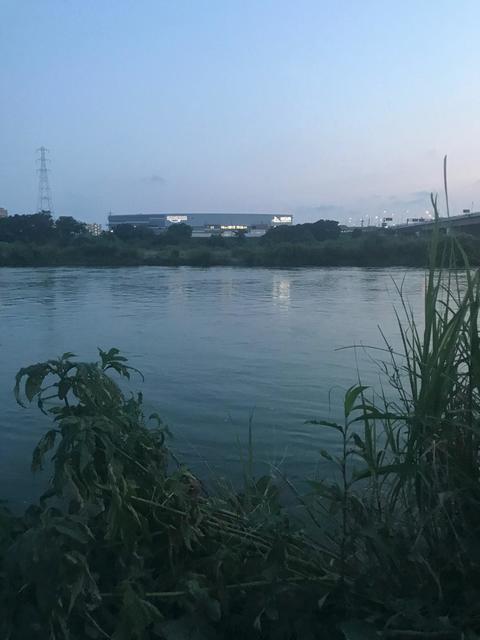 スモールマウス シーバス多摩川中流域 実釣レポート 2020年8月5日