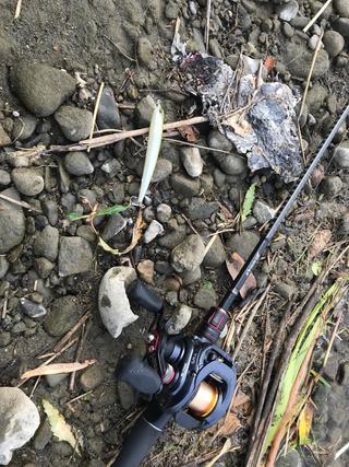 スモールマウス シーバス多摩川中流域 実釣レポート 2020年8月10日